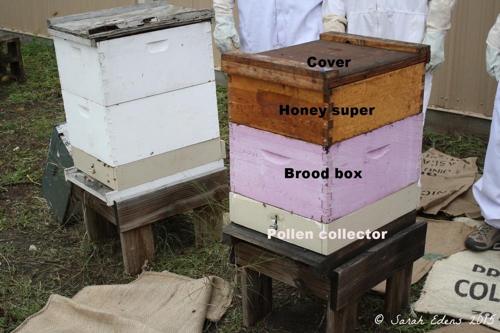 The demo hive