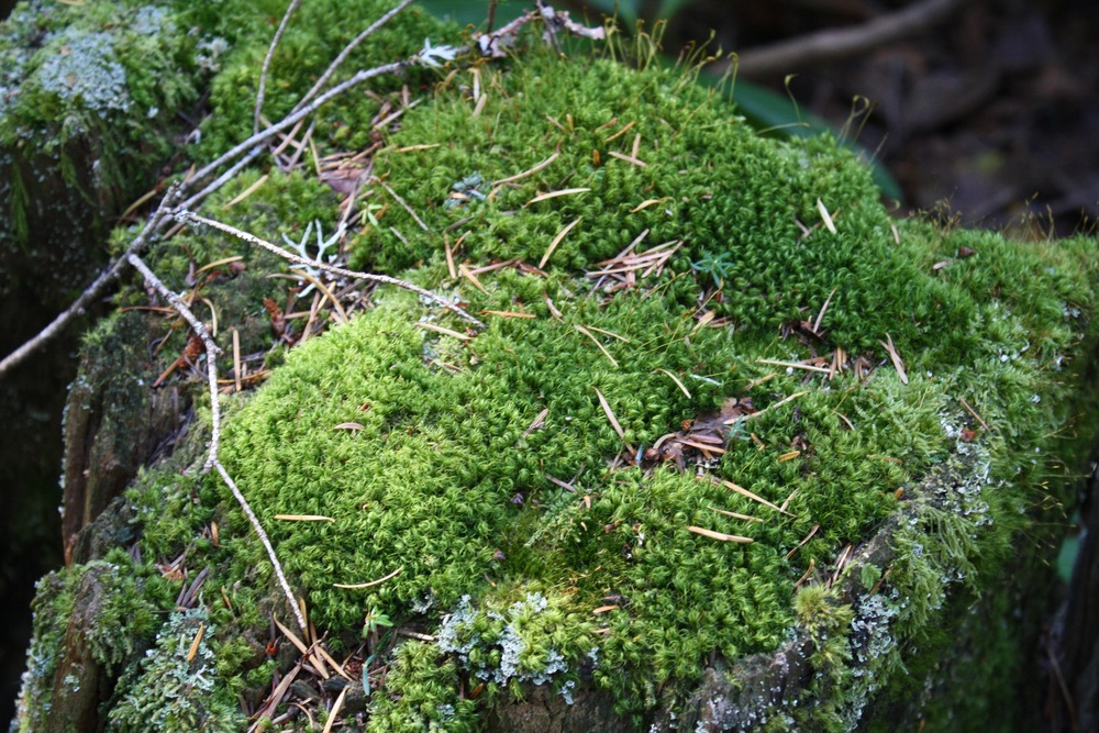 Gorgeous moss on a stump