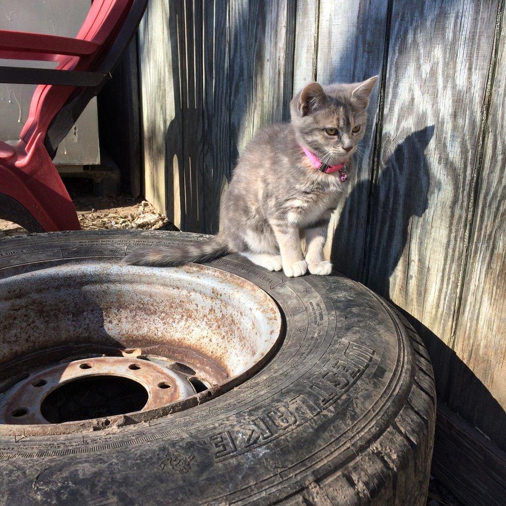 Happy cat at Full Quiver Farm (Suffolk, Virginia)
