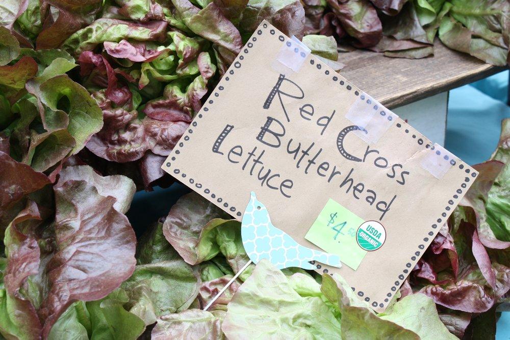 Spring lettuce from  Blenheim Organic Gardens