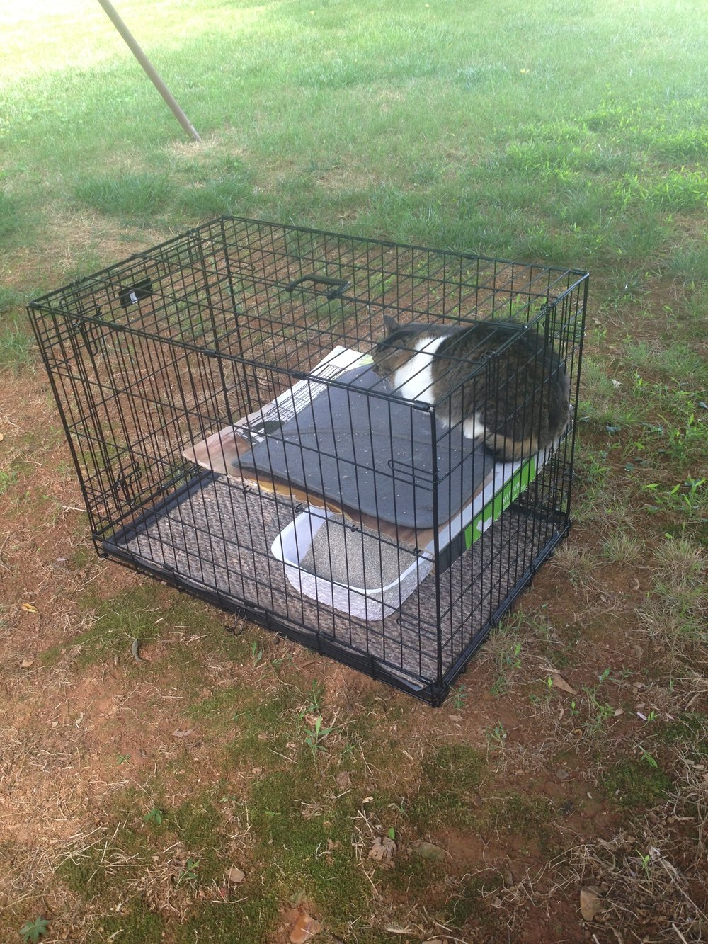 My husband engineered the shelf for Punkin using the metal crate divider that came with this 30-inch-long dog crate...it works horizontally as well as vertically, as you can see!  Then he put down cardboard and an old car floor mat for comfort.  We gave Punkin this disposable litter box to use.