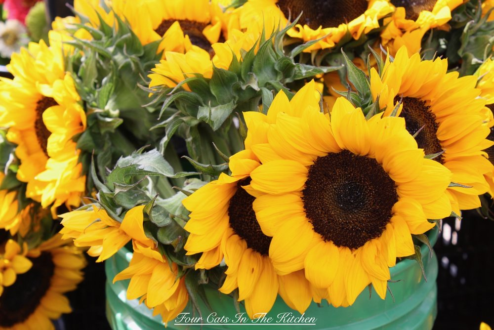 Glorious sunflowers from Amy's Garden, Williamsburg Farmers Market