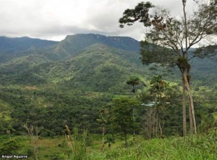 Sobre esta pared del bosque primario se formará el cráter unos 4.700 millones de libras de cobre, estimación de las reservas del proyecto mirador, que se explotara en la Parroquia Tundayme, Cantón el Pangui. Provincia de Zamora Chinchipe