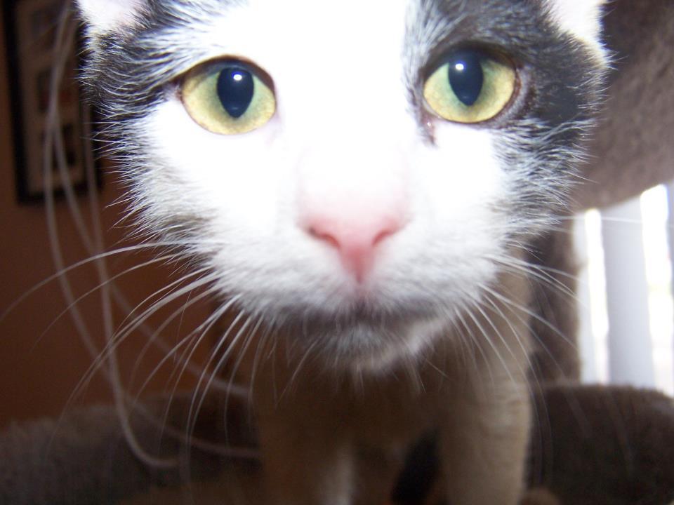 cat nose.jpg