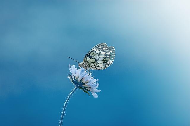 butterfly-1611794_640.jpg