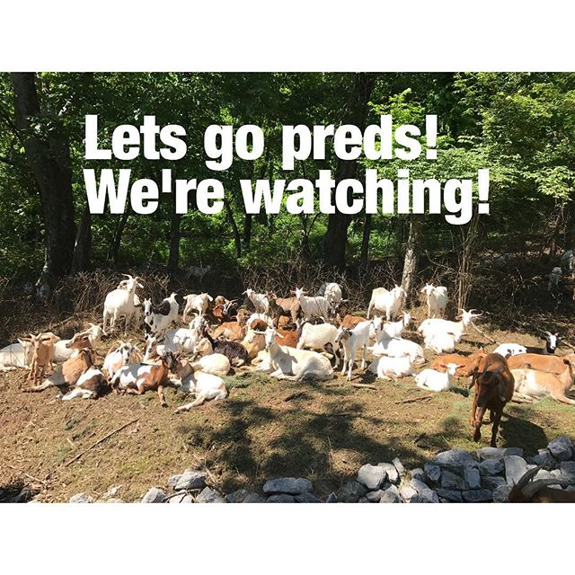 Lets go preds! #goatingtothecup #stanleycupplayoffs #nashvillepredators #goatguys