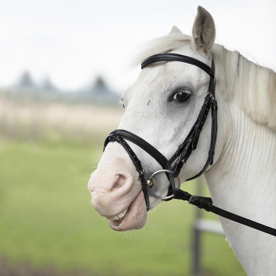 das_lachende_pferd.jpg