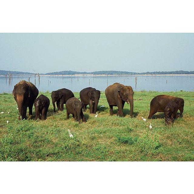 My squad rolling tough.  #contaxg2 #srilanka #safari