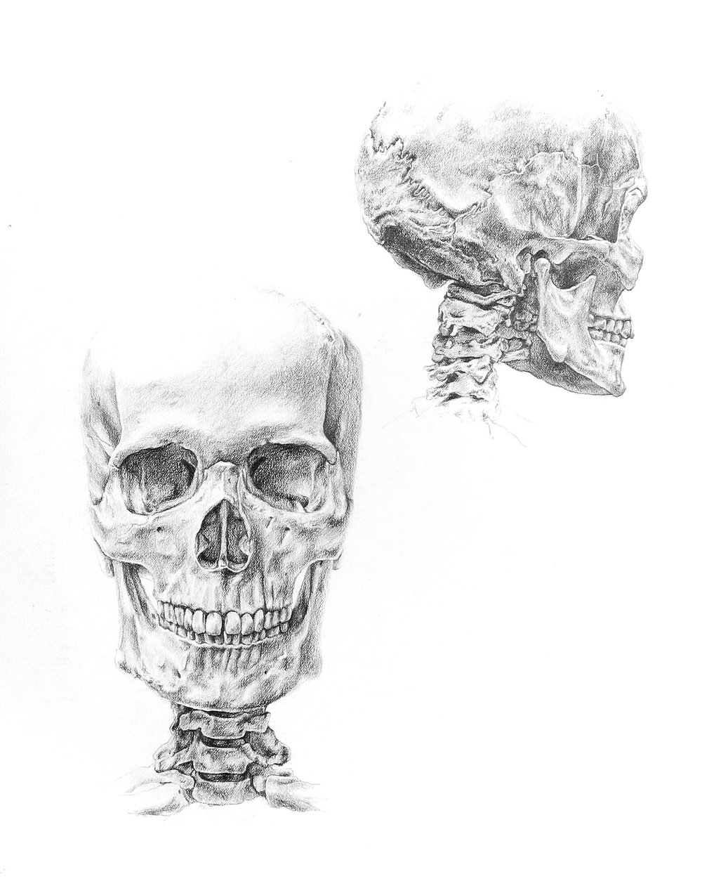 Anatomy Study I (2012) Graphite