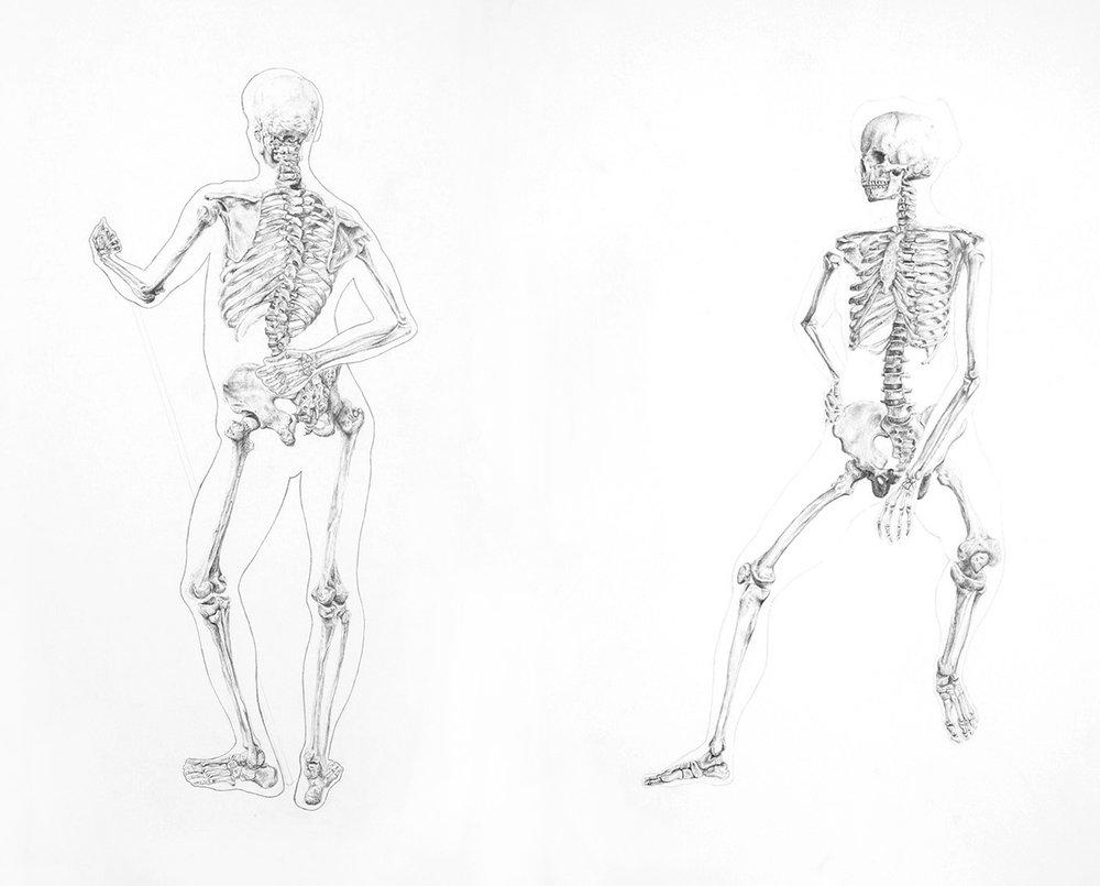 Anatomy Study IV (2013) Graphite