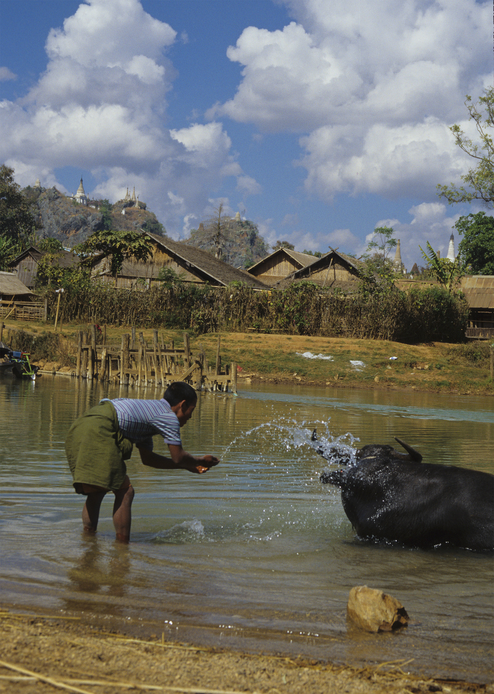 Washing buffalo