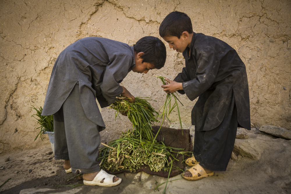 Sorting green onions, Kabul