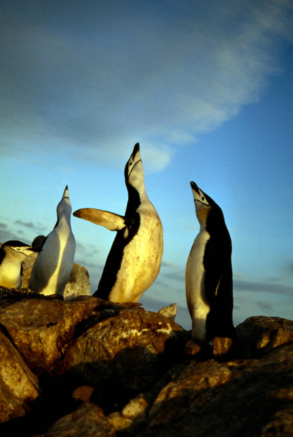 Antarctica040-Edit.jpg