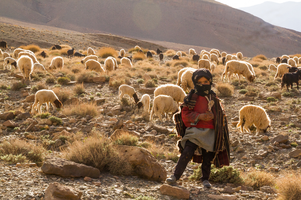 Nomad child herding sheep, Dades Valley