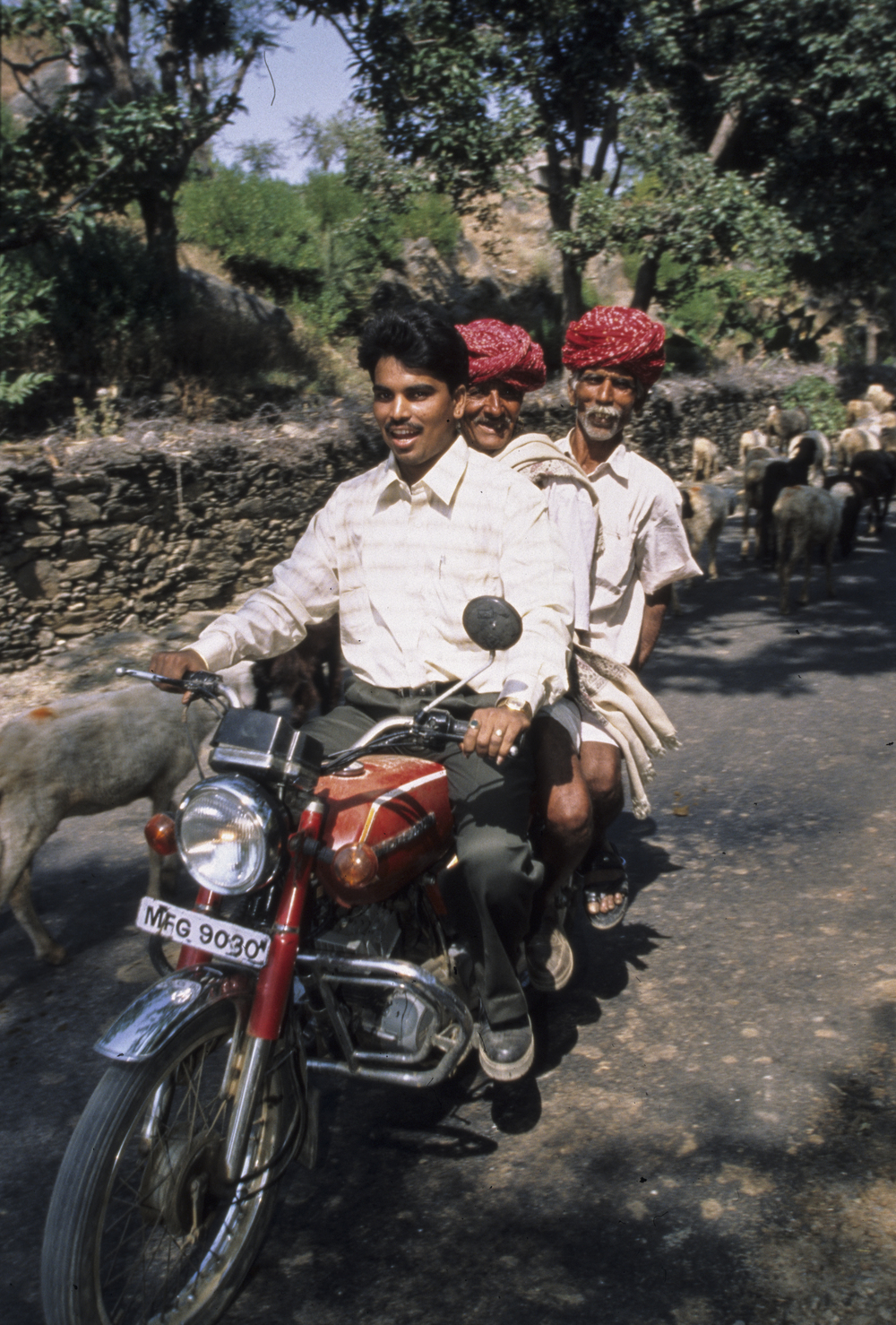 Motorized sheep herders