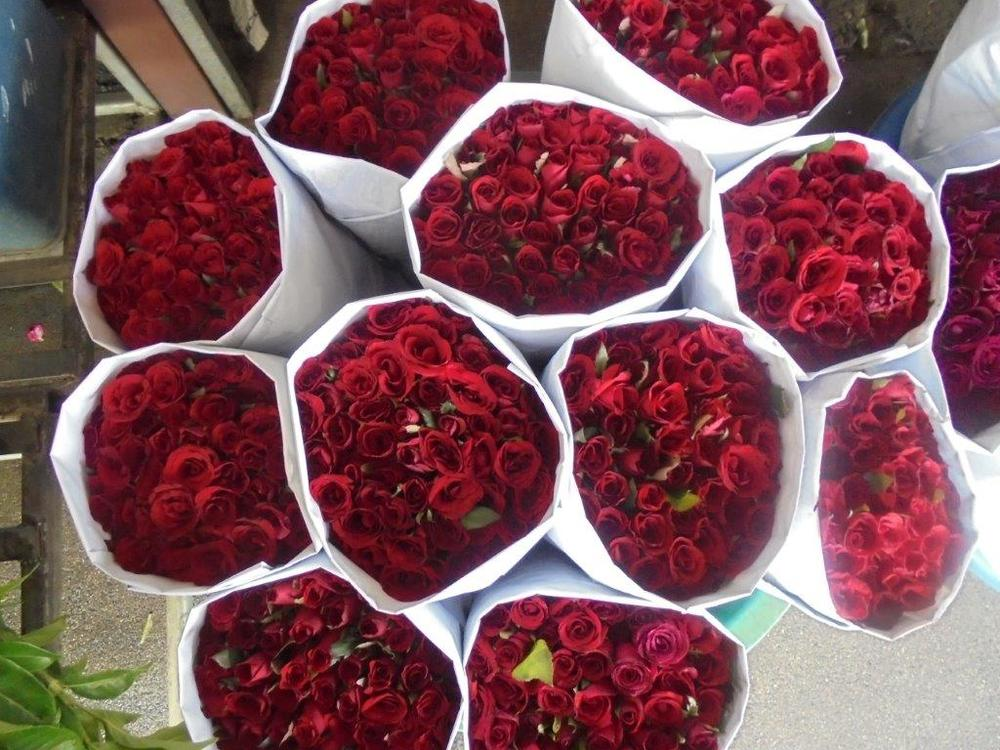 Roses from China
