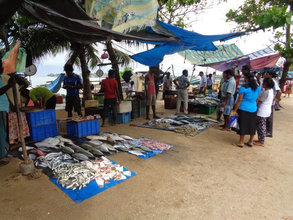 Fish market roadside