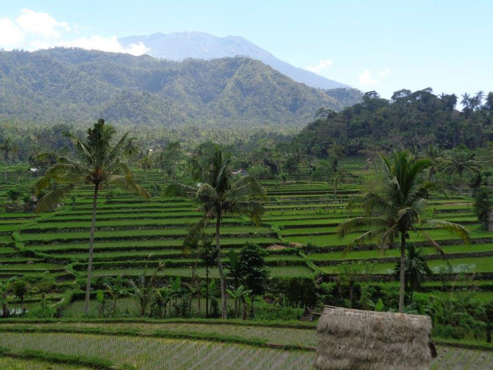 Mt Agung beyond rice paddies
