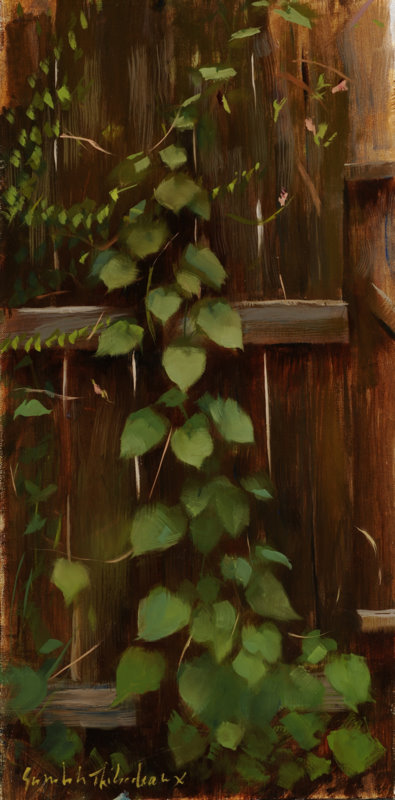 Vine on a fence