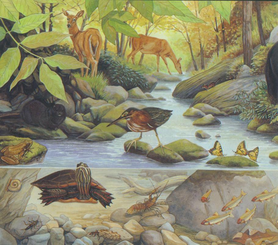 Mountain stream  (left side ).jpg