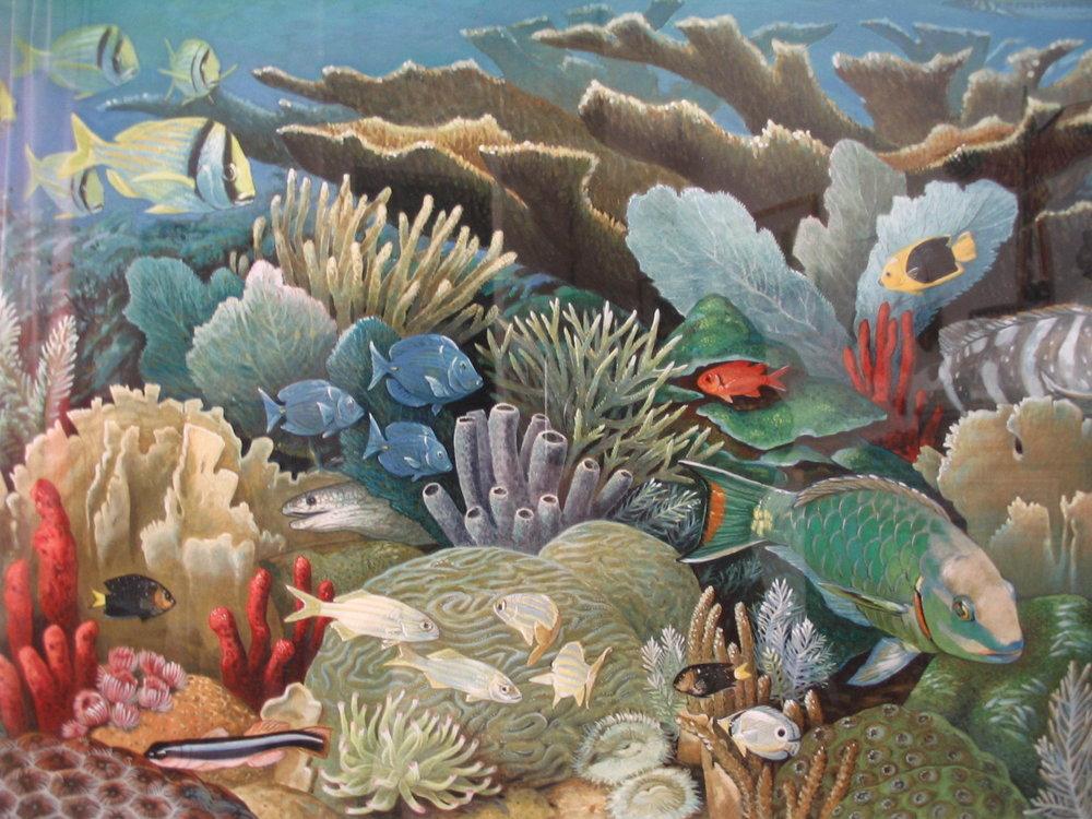 Ocean reef detail.jpg