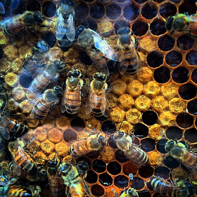 #bees #honey #buzz