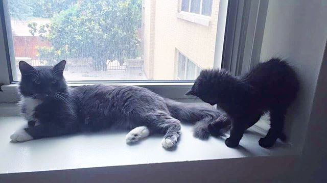 New Year, Same Cat Lady  #kittensofinstagram