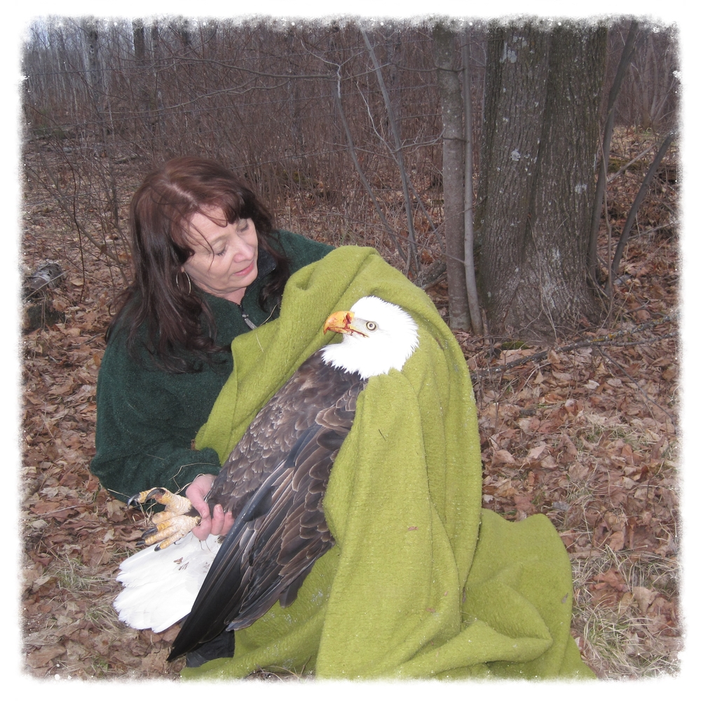 Marge Gibson recovers an injured bald eagle in northern Wisconsin.