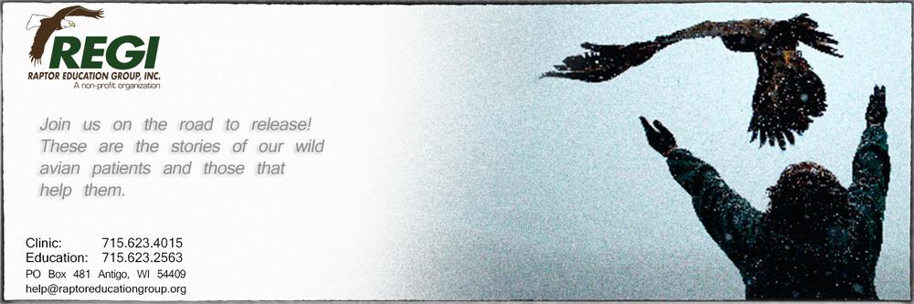 Pesticide Poisoned Eagle Update! — Raptor Education Group, Inc.