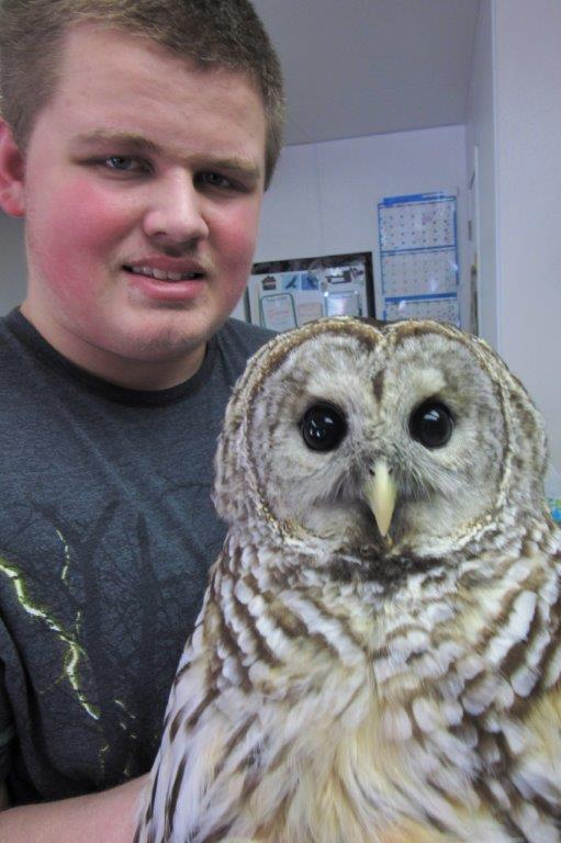 Raptor Education Group Inc Barred Owl Patient