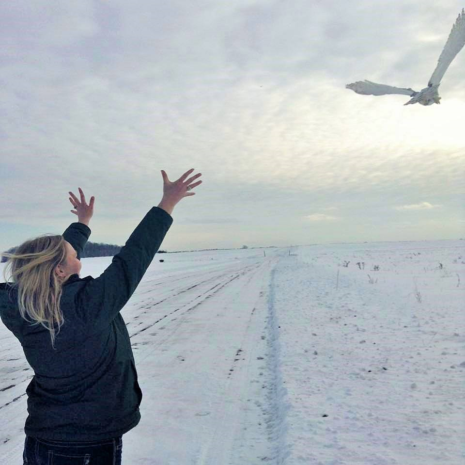 This beautiful female Snowy Owl was released by Abbey and flew to freedom this late afternoon.
