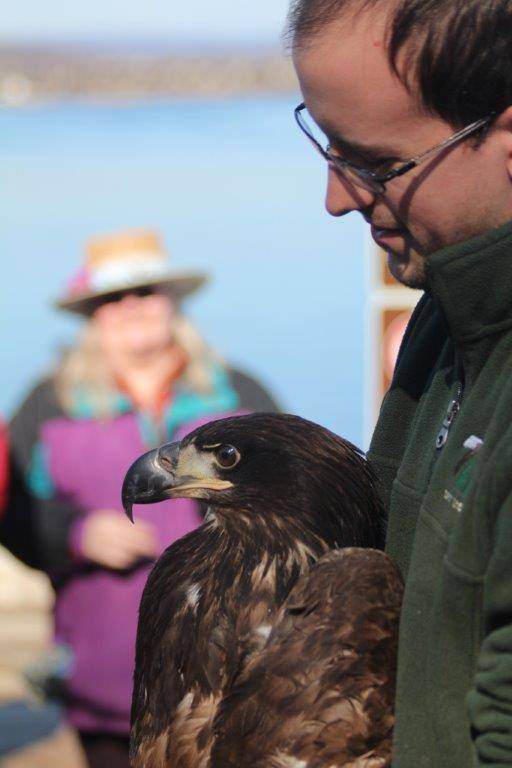 REGI staffer  Jake Looze  with the young female Bald Eagle.