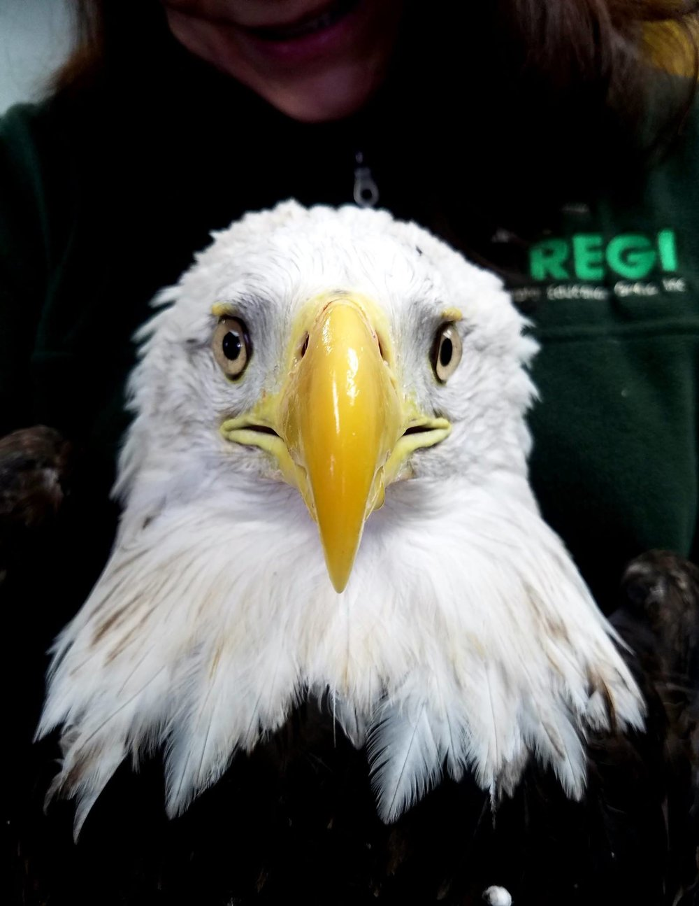 This female eagle was the first released on the 14th.