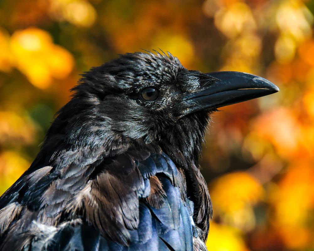 Lenny Crow 2.jpg