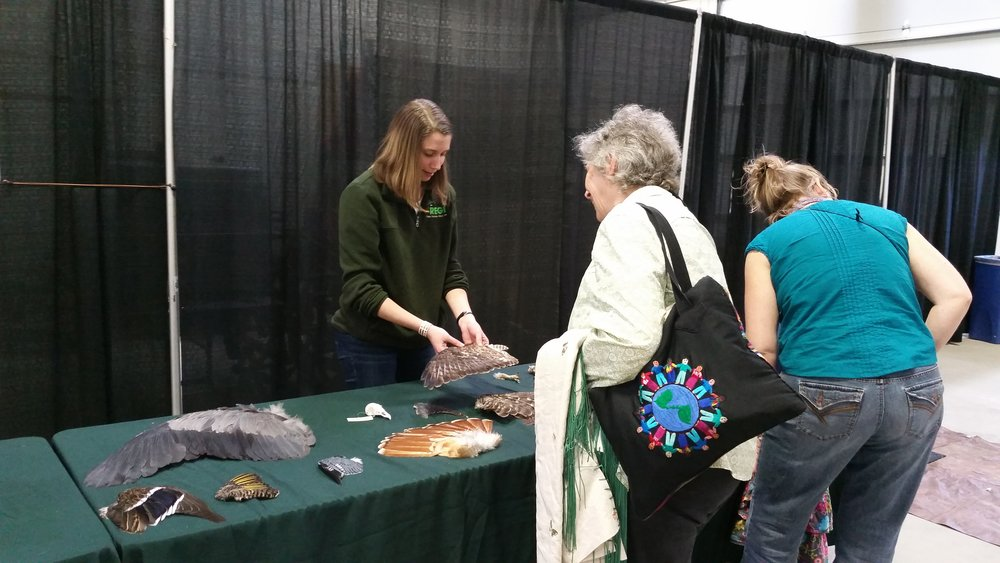 Volunteer, Melissa, teaches visitors about wing identification at the 2017 On Wisconsin Spring PowWow in Madison.