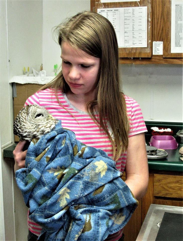 Barred Owl when he arrived from Easton. Thank you to the Arends family.