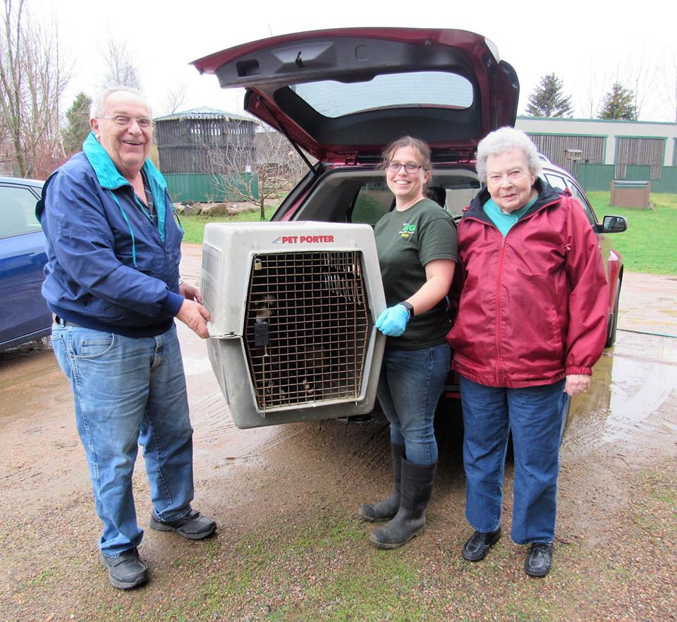 Thank you to Carl and Pat Loving for transporting the male osprey to us tonight . — with Ashley Nilsson