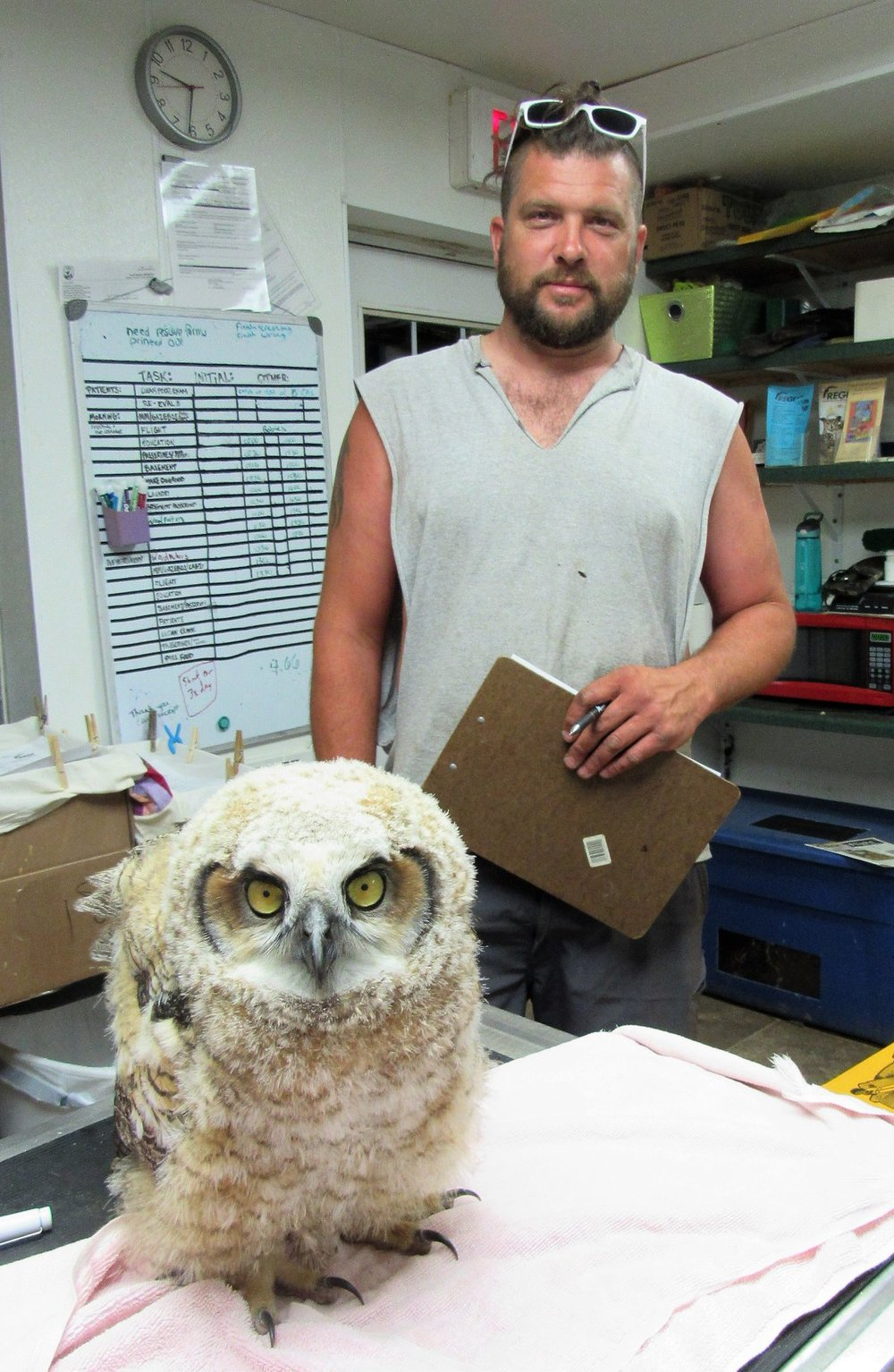 This little tyke Great horned owl was saved by the kindness of a passerby.