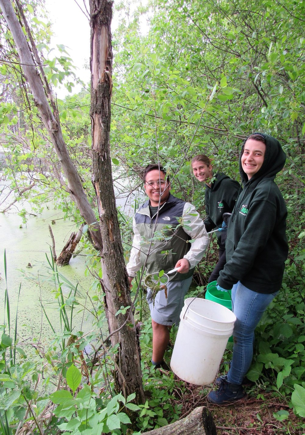 Interns capturing wild duck weed. We need a LOT of clean duck weed to feed our growing colony of baby ducks.