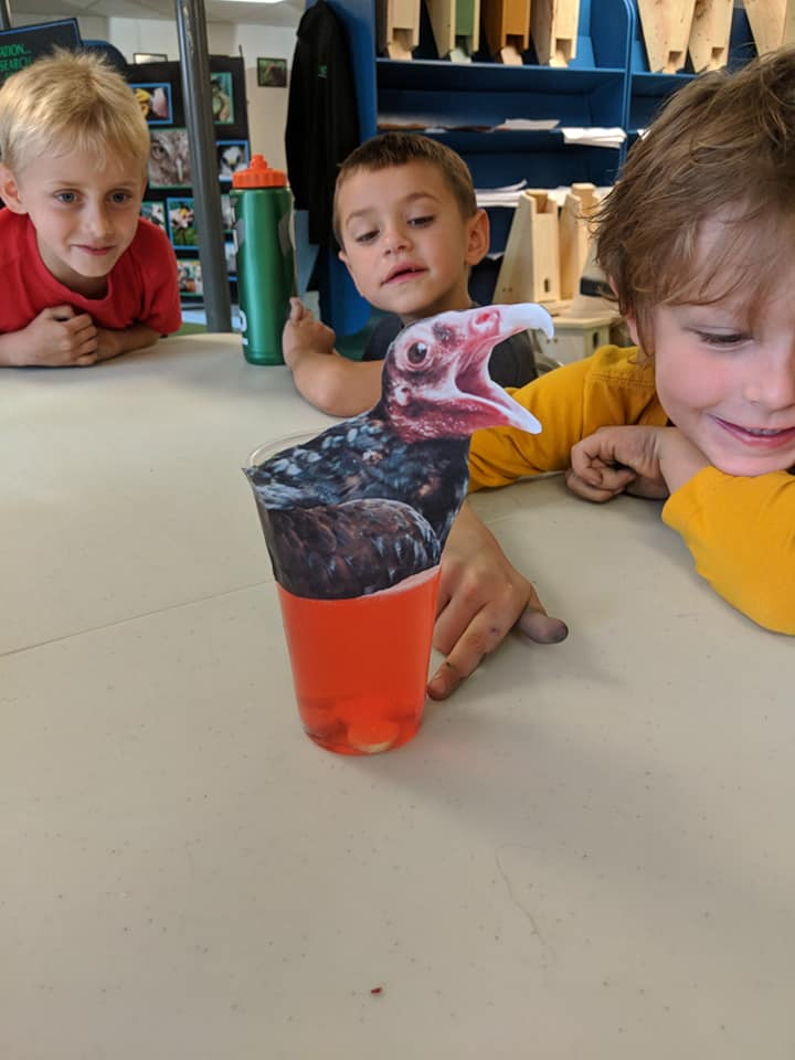 "To demonstrate the strength of a vulture's stomach acid, children dropped a piece of ""meat"" (an antacid) into a vulture's stomach (vinegar and red food coloring) and watched as it dissolved. — with  Katie Ibsen  and  Addie Swenson ."