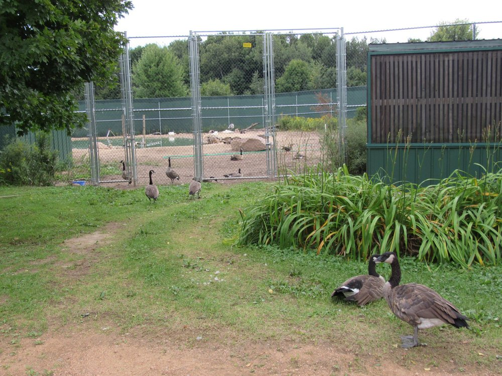 Our new pond area leaves some geese looking in wishing they were REGI patients.:)