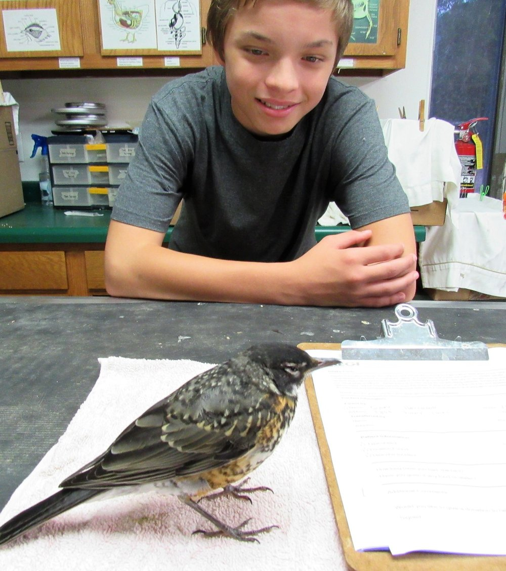 Jennifer Denzine and her family rescued a young robin that suffered from pesticide poisoning.