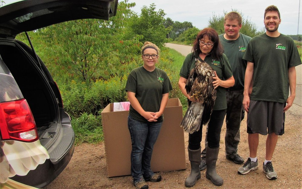 Fall interns Sarah Storandt and Teagan Iwanski helped with the eagle capture on the first day of their internship.
