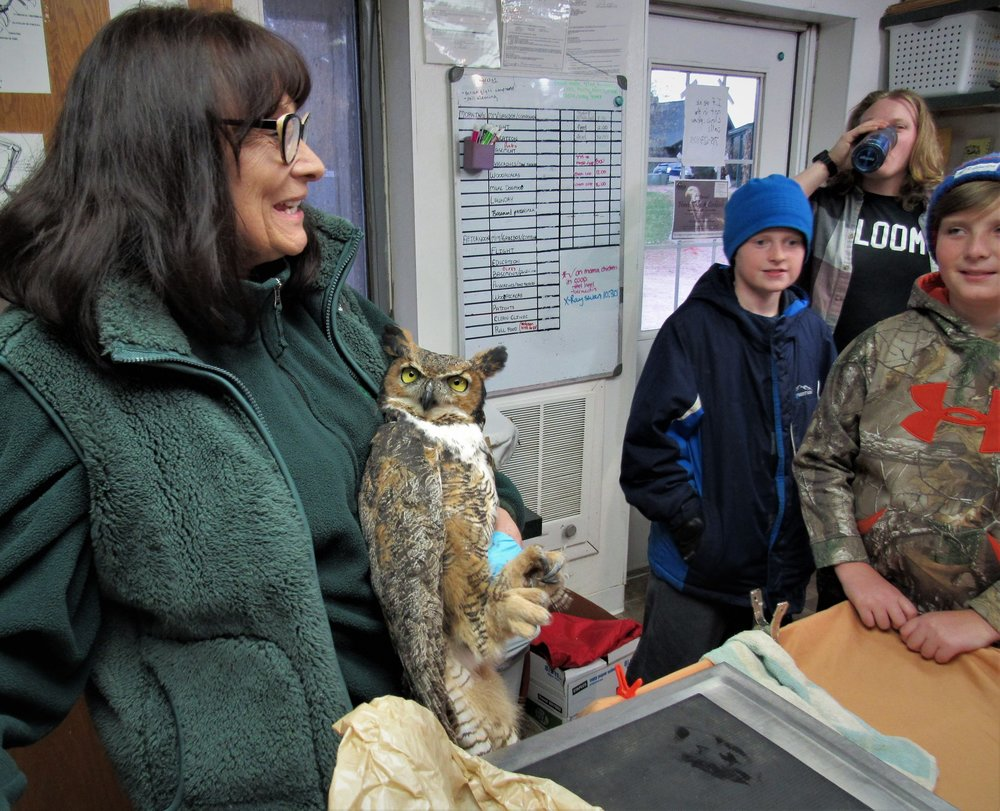 Getting ready for the owl release.