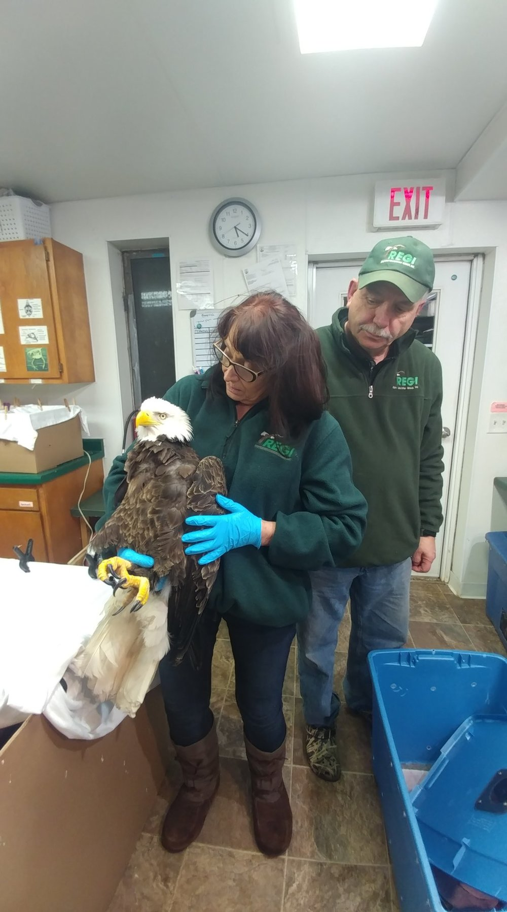 The eagle was weak and unable to fly. Alert landowners noticed him and called for help.