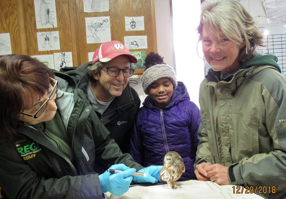 Our thanks to Mark and Carrie Asplund for transporting this female Saw-whet Owl from the Coloma area. Our thanks also to Gina Downy for rescuing the owl from the road.