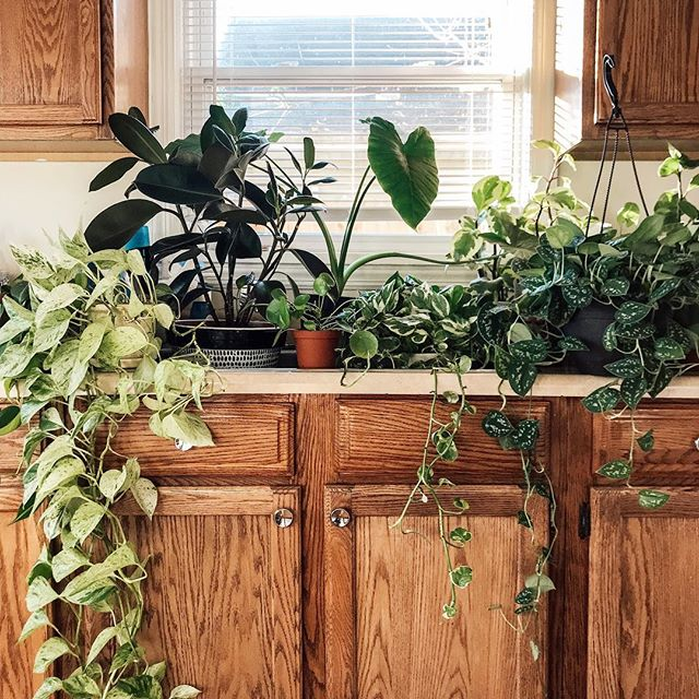 🌿🌱🚰 #houseplants . . . . . . . . #lovelysquares #kindredmemories #simplepleasures #livesimply #simplelife #littlestoriesofmylife #thatsdarling #lovethelittlethings #thepursuitofjoy #thingsiwanttoremember #houseplantclub
