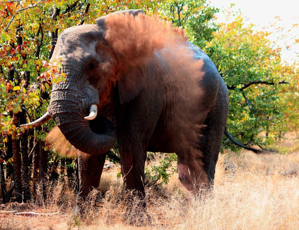Kruger-Park-Day-Trip---elep.jpg