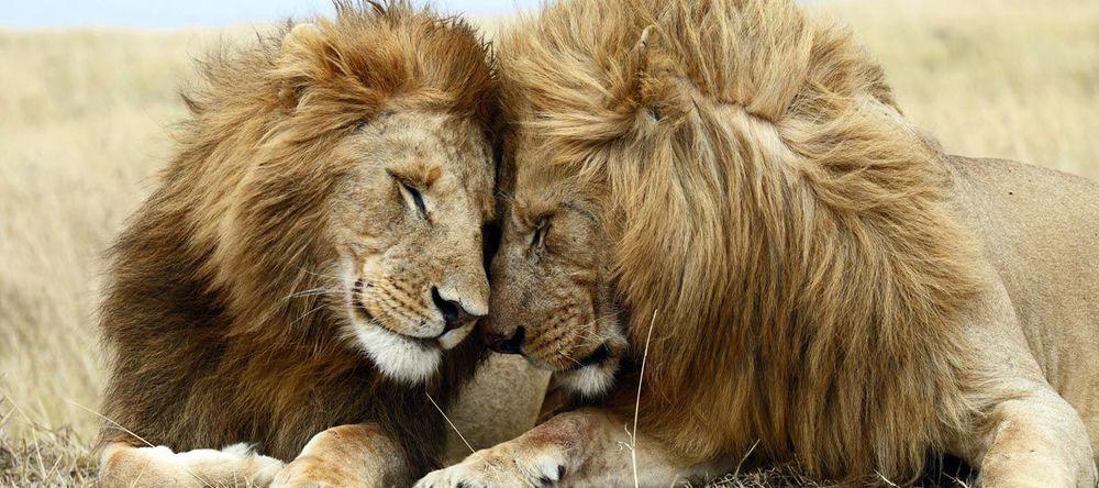 Lions Sabi Sands.jpg