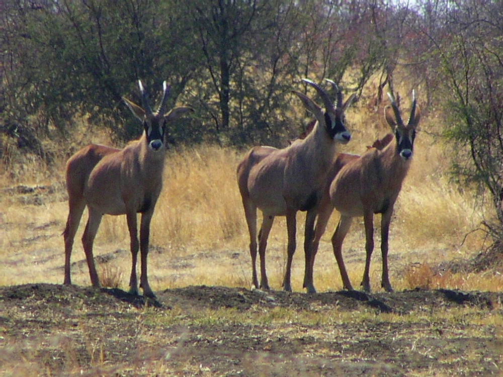 Mulder Family-Namibia&Bots 323.jpg